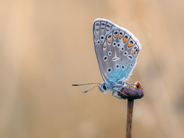 butterfly-2712149_640